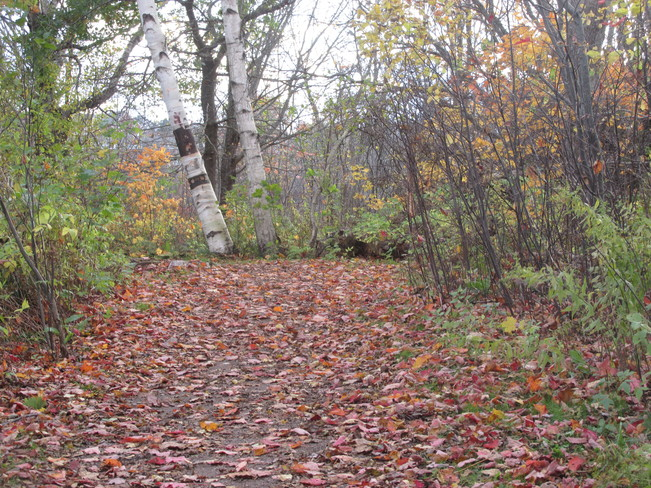 Walking the trails this time of year Sackville, New Brunswick Canada