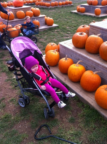 Dills Pumpkin Patch Windsor, Nova Scotia Canada