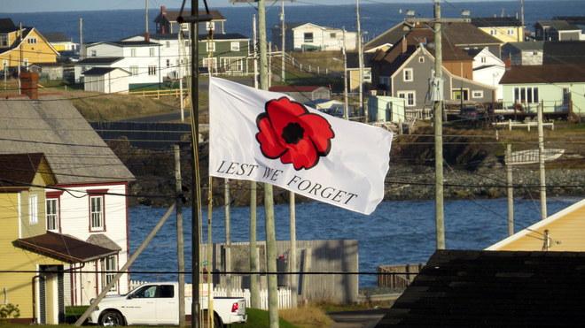 POPPY Bonavista, Newfoundland and Labrador Canada