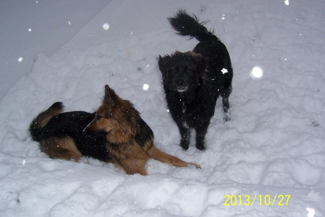 Snow Day for Roxy and Gus Airdrie, Alberta Canada