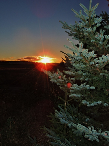 Sun setting behind the Trees St. John's, Newfoundland and Labrador Canada
