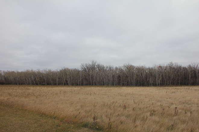 Slate Grey and Bare Trees. Winnipeg, Manitoba Canada