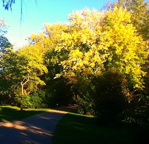 Autumn North Ridge, Ontario Canada