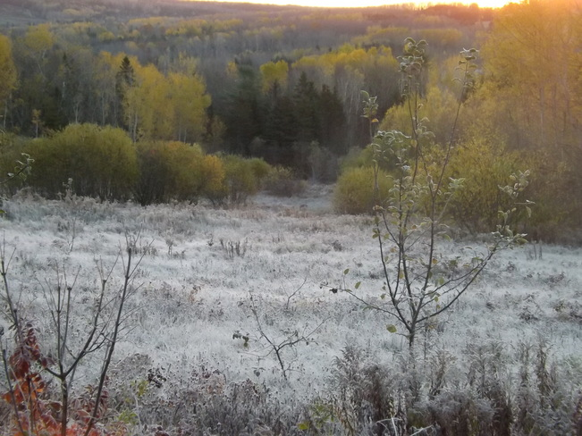 frosty morning New Minas, Nova Scotia Canada