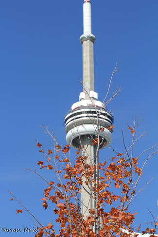 Fall and the CN Tower Toronto, Ontario Canada