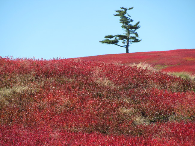 On Blueberry Hill Amherst, Nova Scotia Canada
