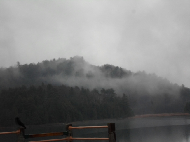 Fog or steam rising from the bush Elliot Lake, Ontario Canada