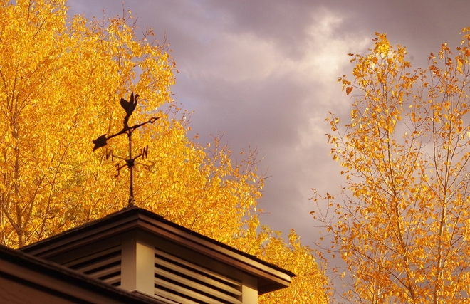 Theres gold in the Autumn Sun Kelowna, British Columbia Canada
