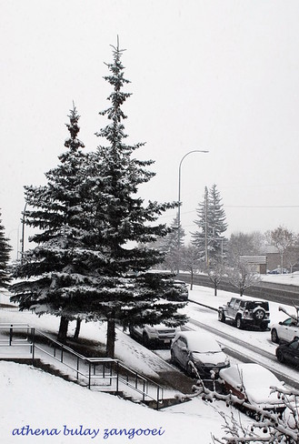 It is White in the City! Calgary, Alberta Canada