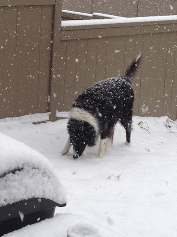 Jacob playing in the snow Calgary, Alberta Canada