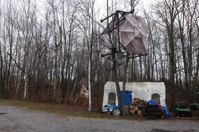 8x8 Gazebo climbing trees Curran, Ontario Canada