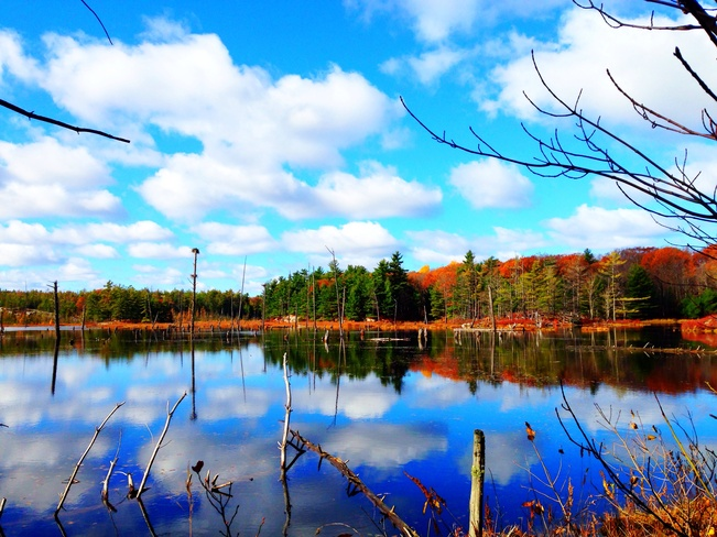the beaver pond at Blue Mntn Blue Mountain, Ontario Canada