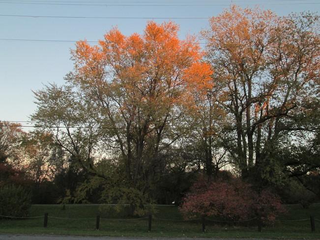 Late Fall Colours on Trees in Arboretum of Experimental Farm Ottawa, Ontario Canada