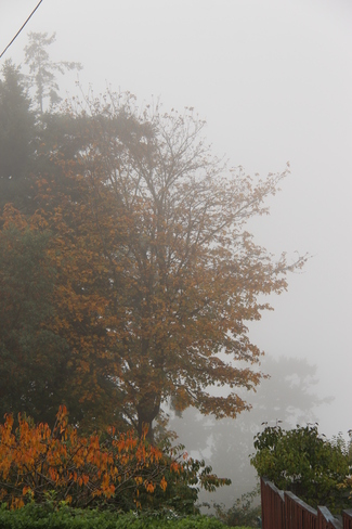 Foggy Fall Day Powell River, British Columbia Canada
