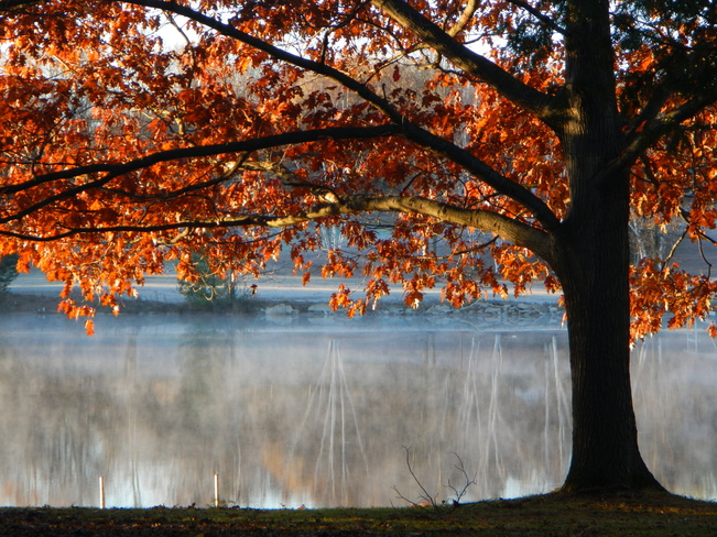 Red Tree Misty River Gladwin, Michigan United States
