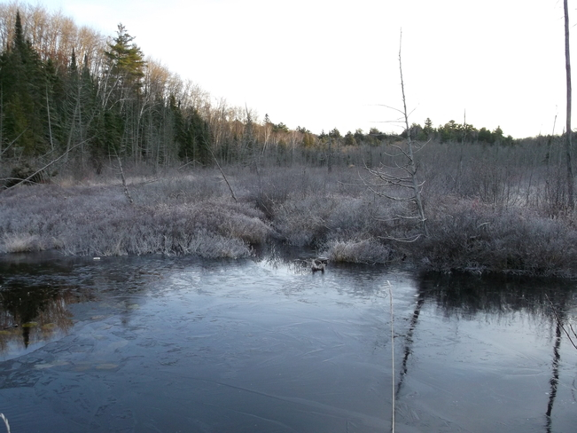 Frosty Swamp Massey, Ontario Canada