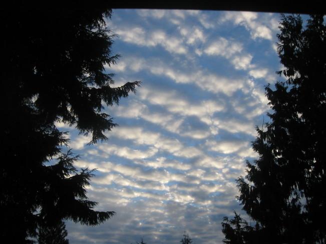 rows Surrey, British Columbia Canada