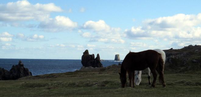 Horses Cape Bonavista Bonavista, Newfoundland and Labrador Canada