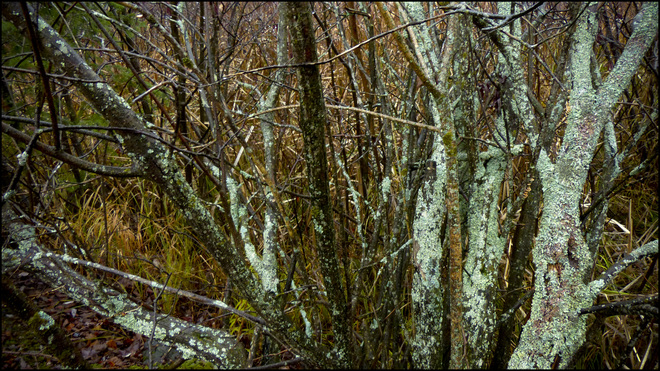 Sherriff Creek wet branches with growth. Elliot Lake, Ontario Canada