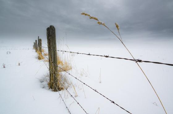1a. Fence