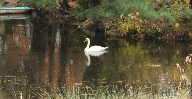 """Swanflake"""" Aylmer, Ontario Canada"""
