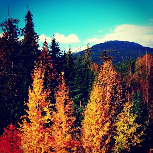 Pretty Treeeeeeeeees Whistler, British Columbia Canada