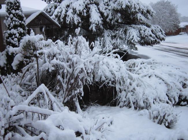 A SNOW DAY !!!!!!! Hanover, Ontario Canada