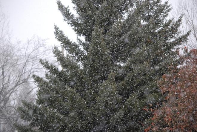 Snowing Brandon, Manitoba Canada