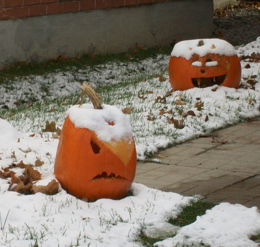 Snow on the Pumpkin Barrie, Ontario Canada