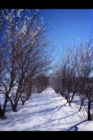 Avenue of trees North Battleford, Saskatchewan Canada