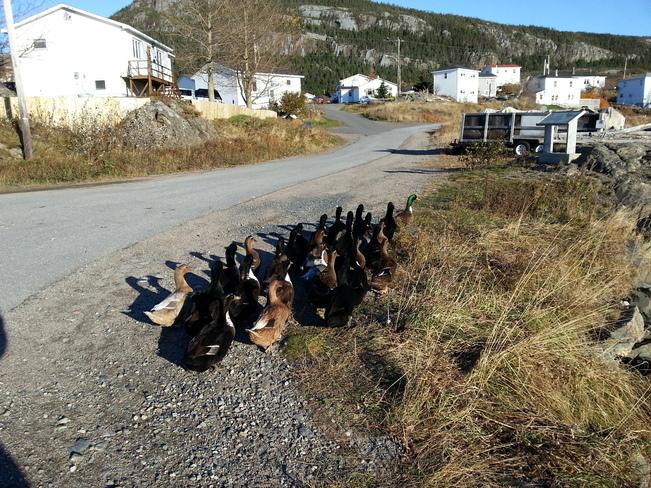 Nov 9 Salvage, Newfoundland and Labrador Canada