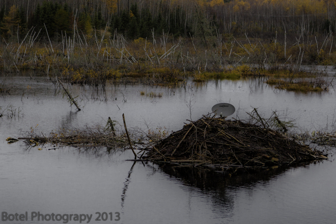 Beaver Lodge for rent Red Lake, Ontario Canada
