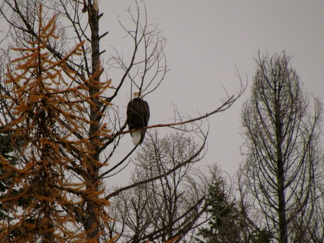 KEEPING AN EAGLE EYE ON THINGS Cranbrook, British Columbia Canada
