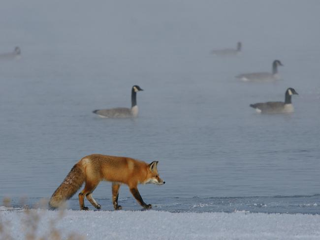 Hunting in the Fog Bonnyville, Alberta Canada