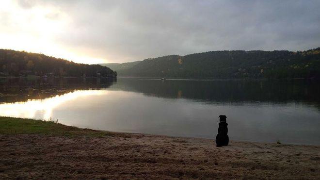 Our dog BB at the lake Mattawa, Ontario Canada