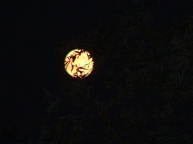 50 Moon Dartmouth, Nova Scotia Canada