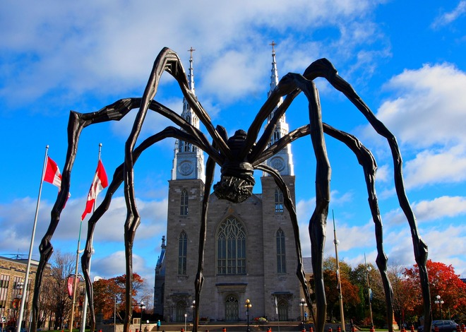 spidy Ottawa, Ontario Canada