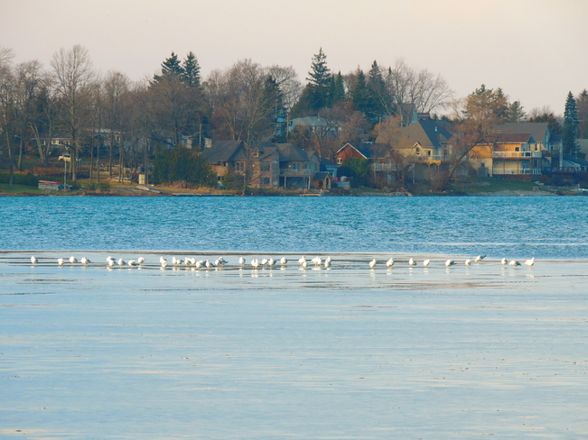 Lake Scugog Icing Over in the Cold. Port Perry, Ontario Canada
