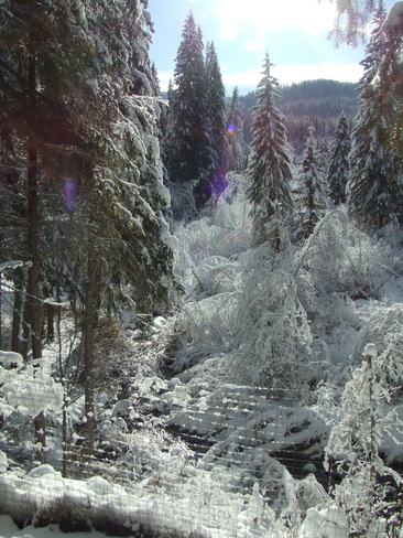winter at bradley creek... Forest Grove, British Columbia Canada