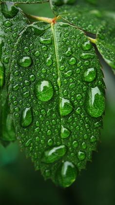 5b. Leaf