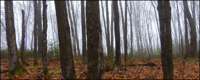 Sheriff Creek red trail fog in the woods. Elliot Lake, Ontario Canada