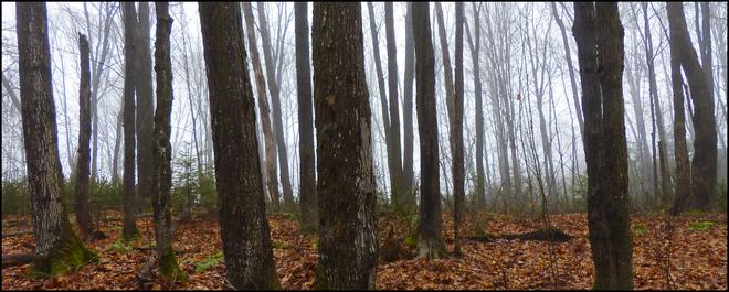 Sheriff Creek red trail fog in the woods. Elliot Lake, Ontario Canada