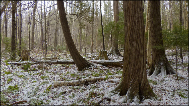 Sheriff Creek red trail, a dusting of snow. Elliot Lake, Ontario Canada
