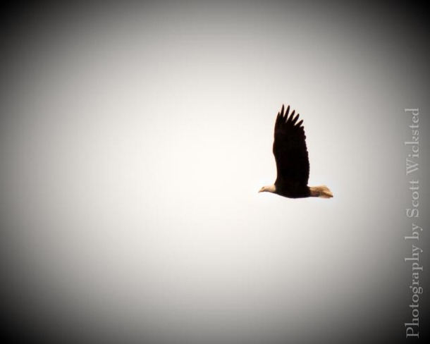 Soaring high. Middle Kouchibouguac, New Brunswick Canada