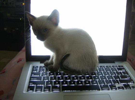 MAC kitty