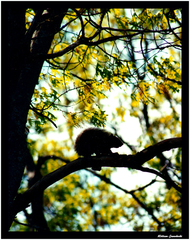 """UP A TREE"" Escanaba, Michigan United States"