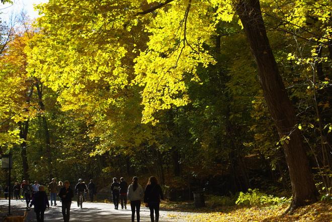 Autumn Montréal, Quebec Canada