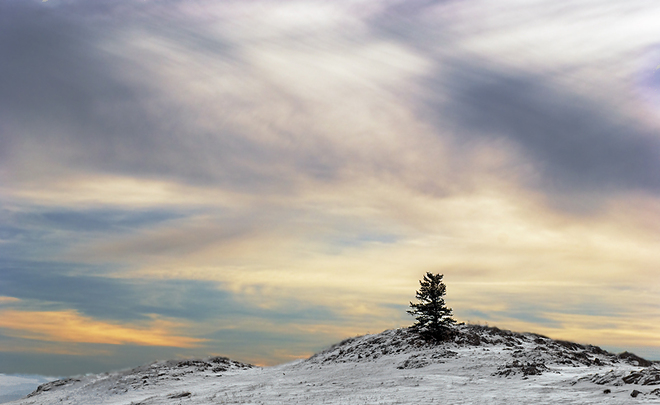 Lone Pine in Morning Light