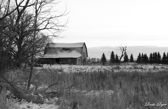A Touch Of Gray Argyle, Manitoba Canada