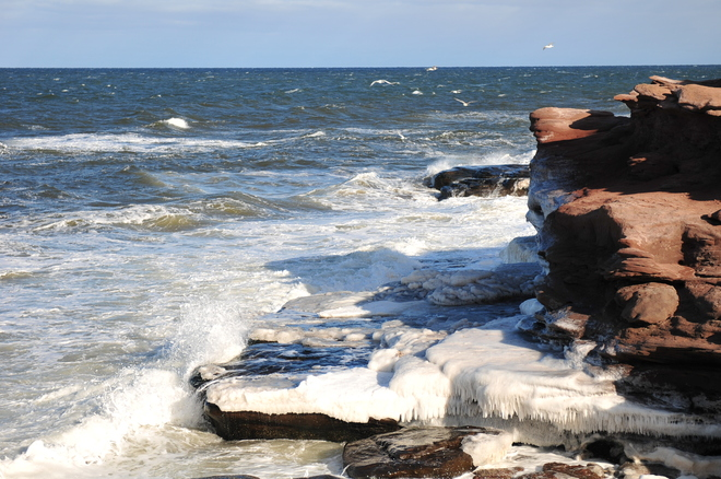 The cliffs are becoming icy. Cap-Pele, New Brunswick Canada